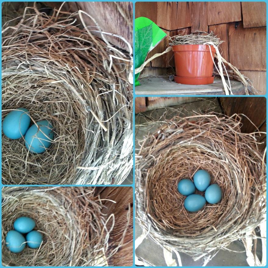 154 new nest