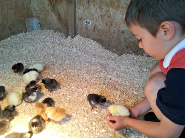159 xander chicks