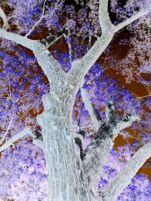 180 mighty oak