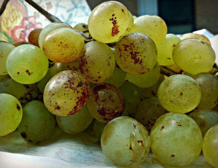 274-grapes