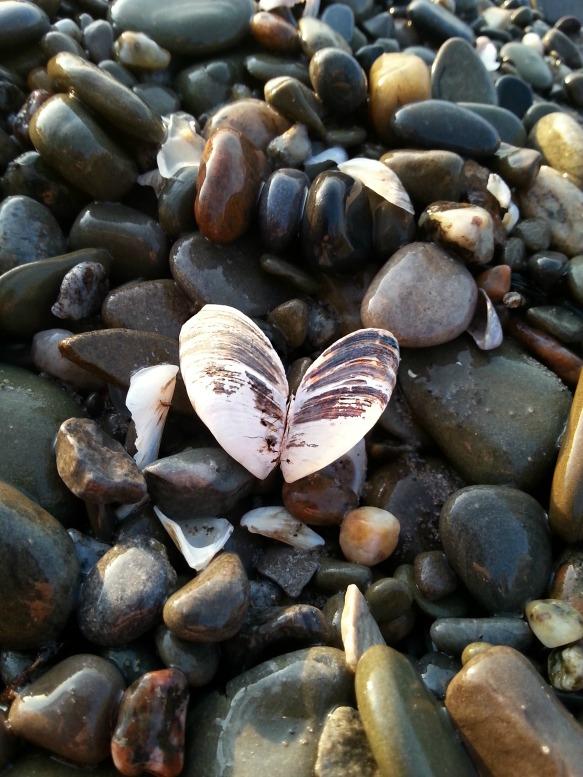 223 heart shell.jpg
