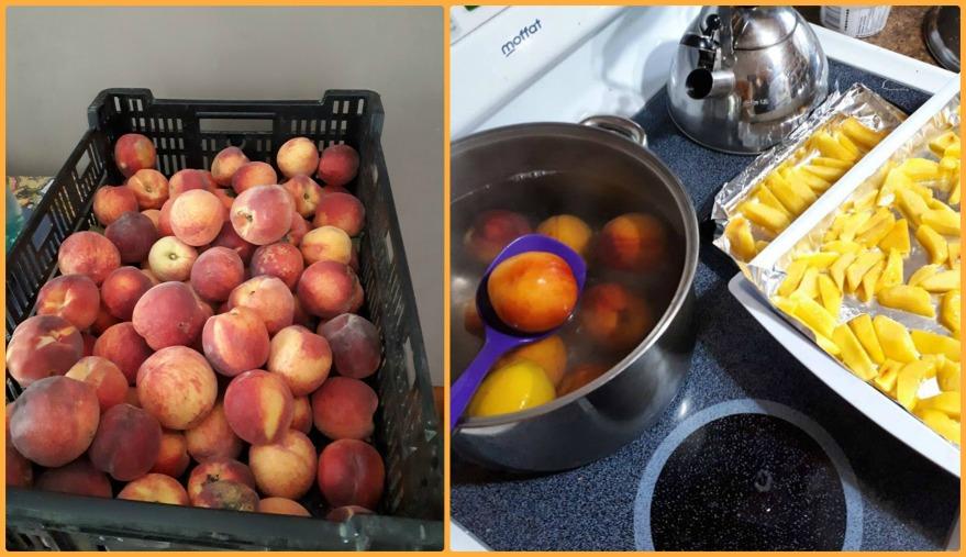 242 peaches