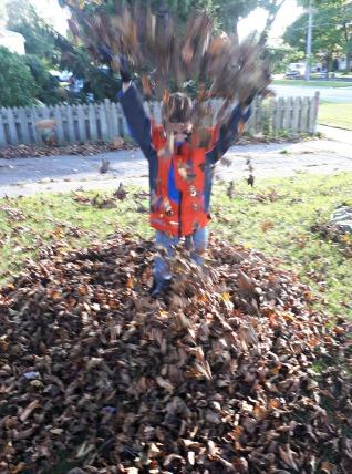 290 leaf toss