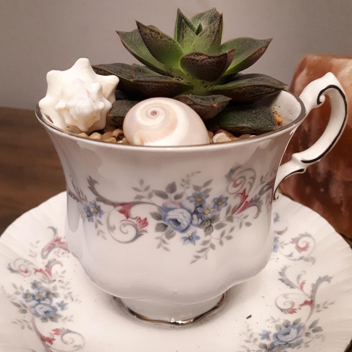 322 cup of pretty.jpg