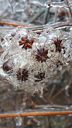 37 ice seeds