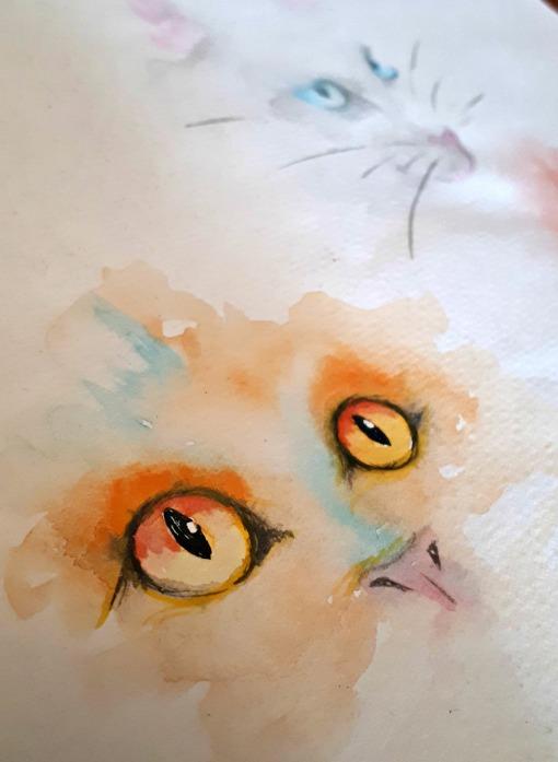 54 cats eye