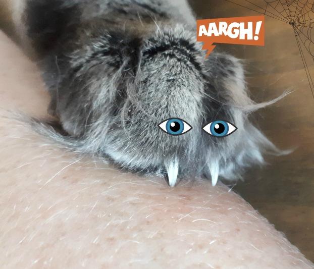 68 spider paw