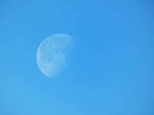 84 day moon