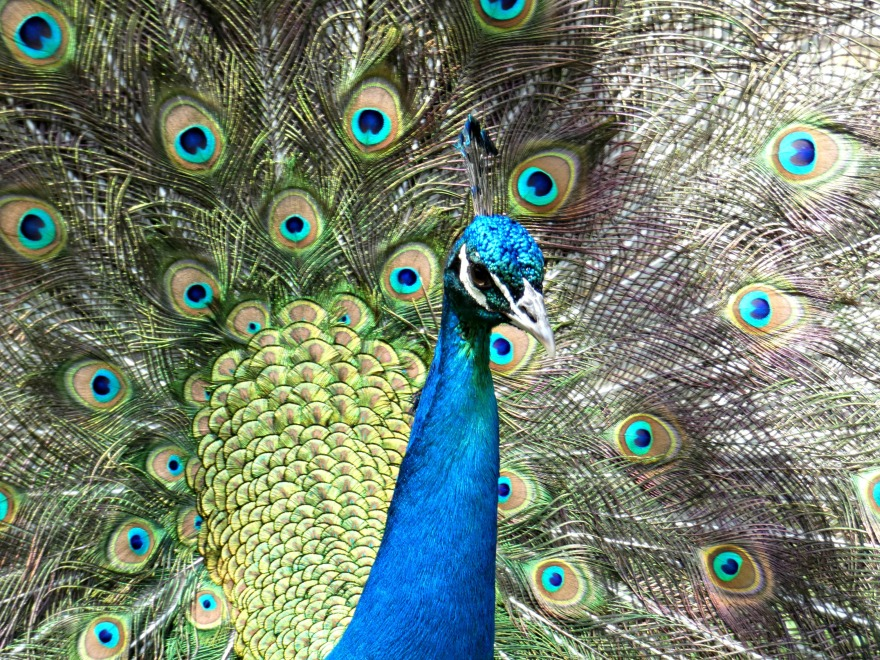 182 plumage.jpg
