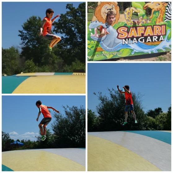 240 safari jumping