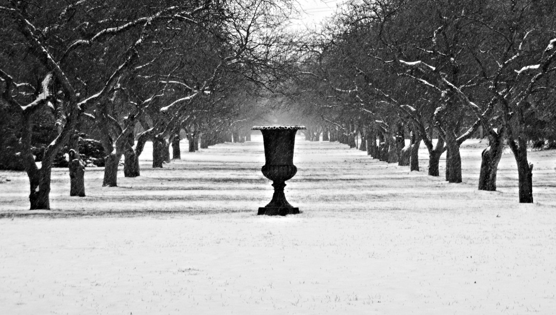 348 winter garden
